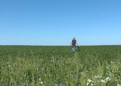 Ask a farmer: Why raise cover crops?