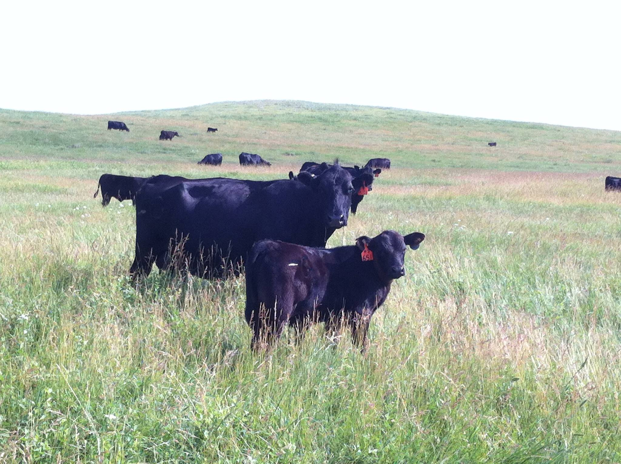 South Dakota rancher shares his love of his business
