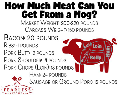 how much meat can you get from a hog